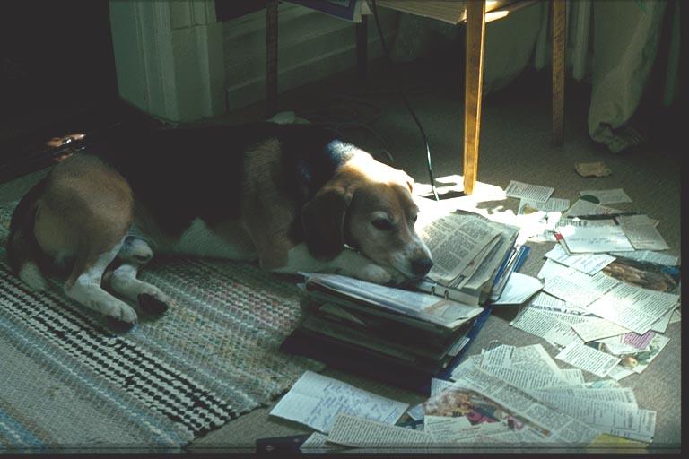 Medvetet hundägarskap