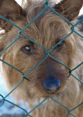 Bild ur boken Farliga hundar